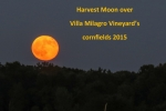 The harvest moon rises over Villa Milagro Vineyards