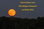 The harvest moon rises over Villa Milagro Vineyards